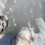 Oui, oui, c'est de la glace