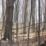 Forêt de tuyaux