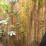 Mur de lianes
