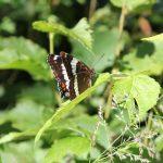 Oune magnifique papillionne