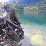 La solitude du tronc
